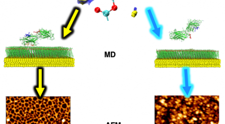 """New paper: """"Minor chemistry changes alter surface hydration to control fibronectin adsorption and assembly into nanofibrils"""""""