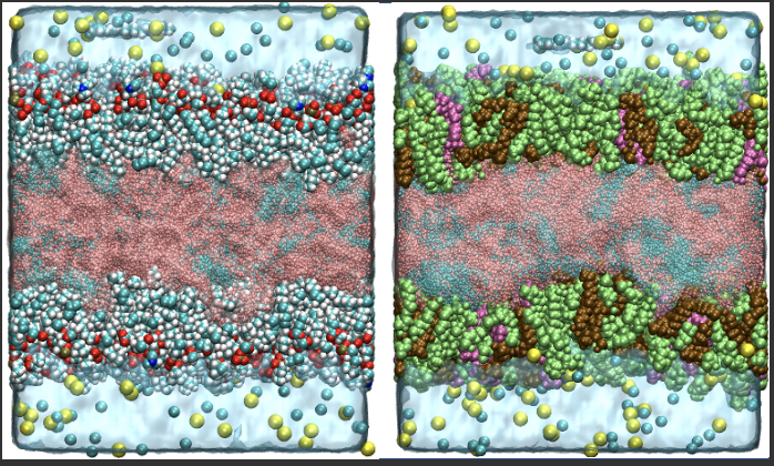 MD simulations + TR-FAIM w/ fluorescent molecular rotors combined to study lipid droplets