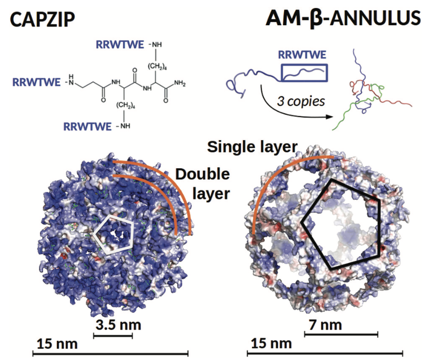 Nanocapsule designs for antimicrobial resistance